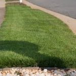 How to Buy Sod