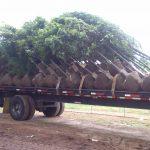 Buy Trees